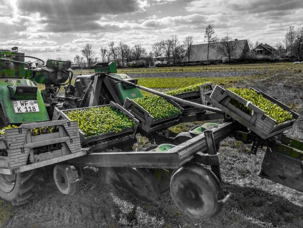 Erste Freilandpflanzungen für dieses Jahr