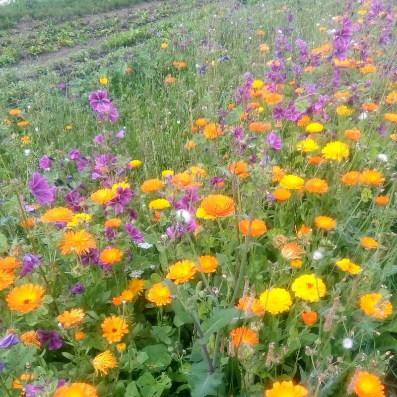 Unser kleiner Blühstreifen in der Gärtnerei